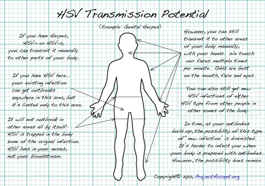 transfer hsv